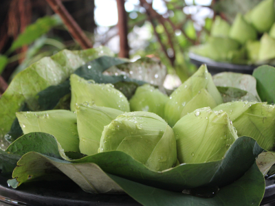 Lotus buds at a Thai temple